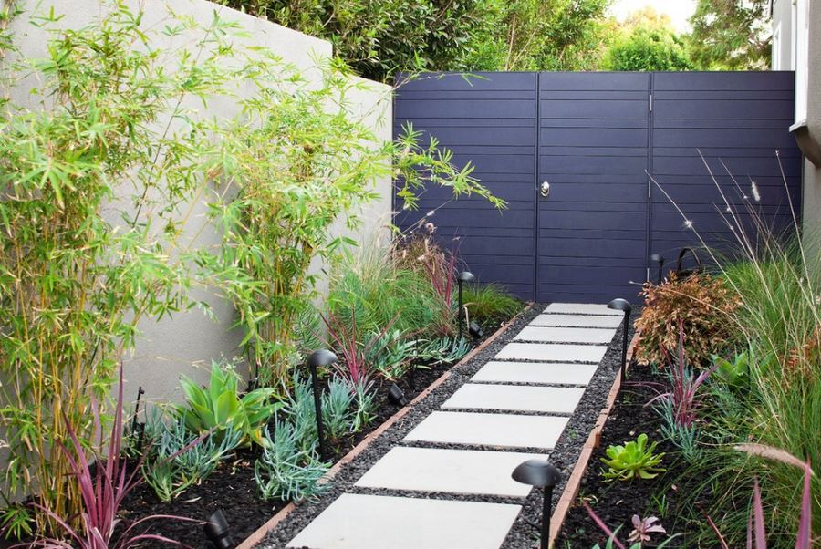 clumping-bamboo-against-a-neutral-wall